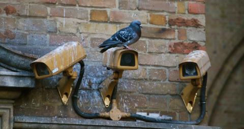 Eine Taube ... auf Überwachung.